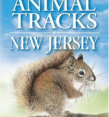 Animal-Tracks-of-New-Jersey-Animal-Tracks-Guides-0