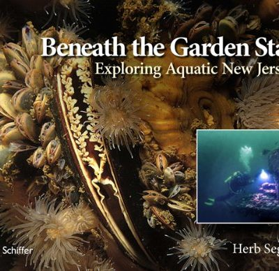 Beneath-the-Garden-State-Exploring-Aquatic-New-Jersey-0