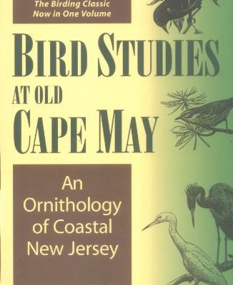 Bird-Studies-at-Old-Cape-May-0