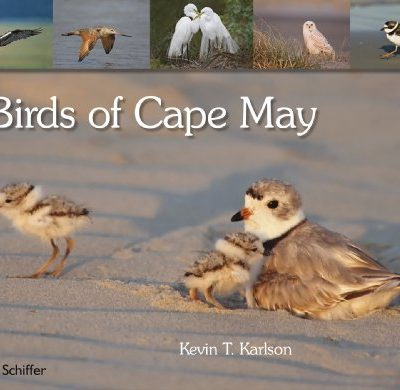 Birds-of-Cape-May-New-Jersey-0