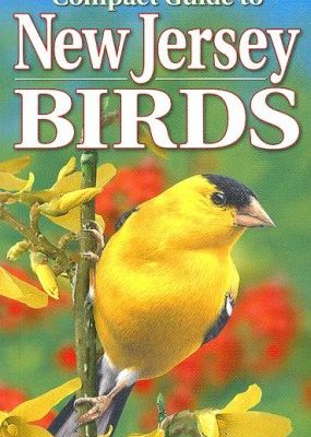 Compact-Guide-to-New-Jersey-Birds-0