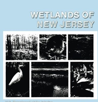 Wetlands-of-New-Jersey-0